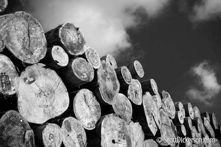 Photo of a log pile in Vietnam - black and white.