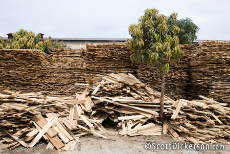forestry processing in vietnam