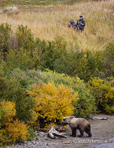 Bear hunters it Katmai National Preserve